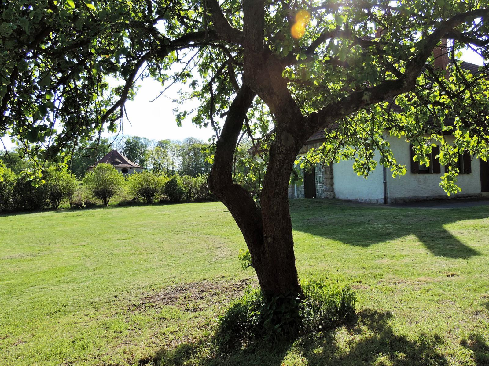 Apfelbaum Blick Richtung Haus Ringgau